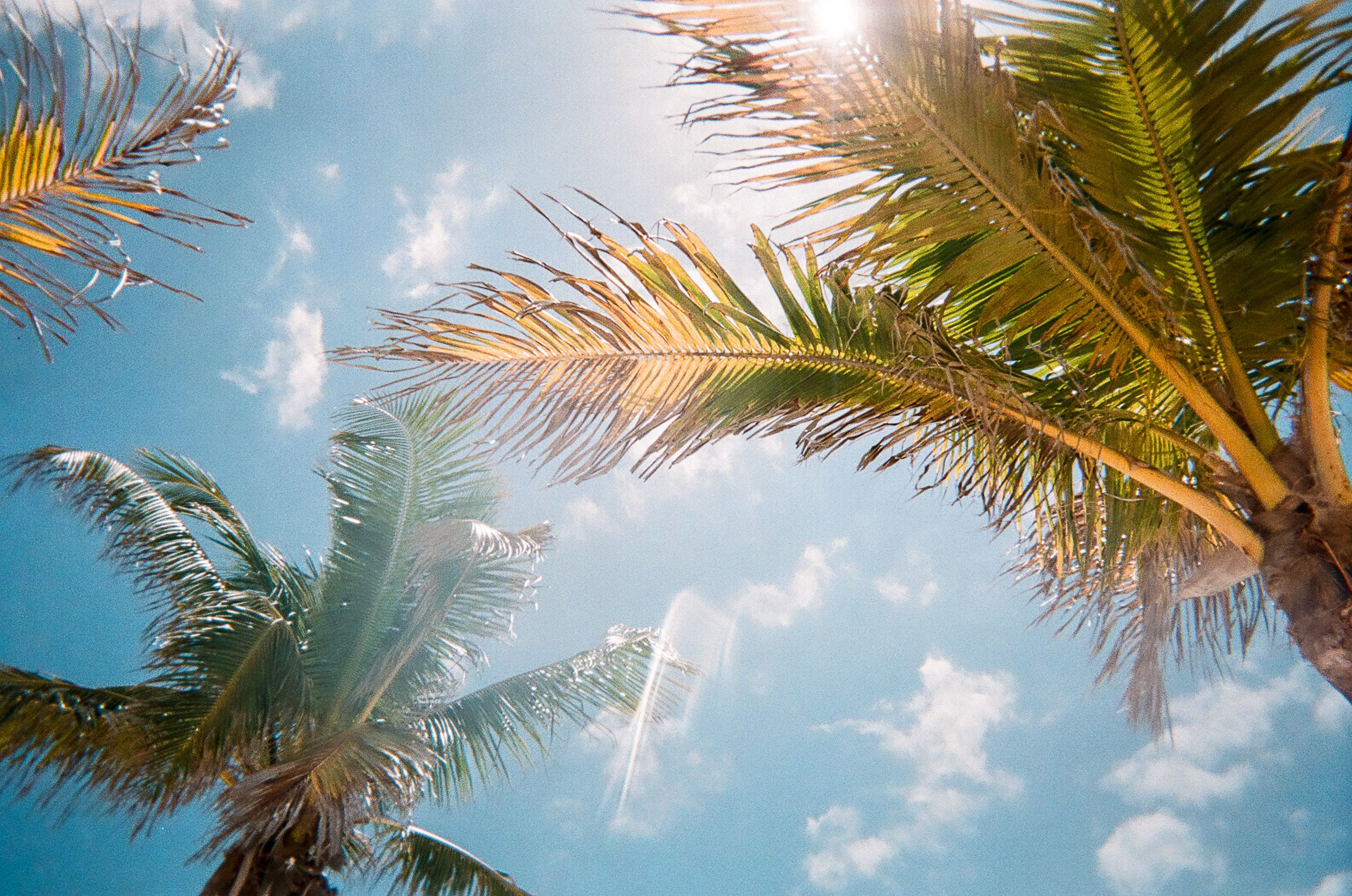 Sunny South Florida